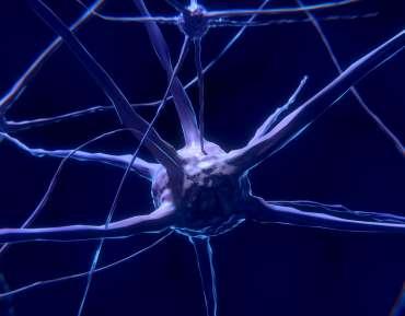 ¿Tu cerebro tiene algún tipo de entrenamiento?
